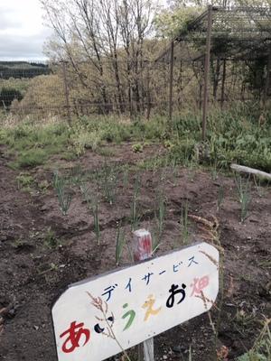 あいうえお畑201505.jpg